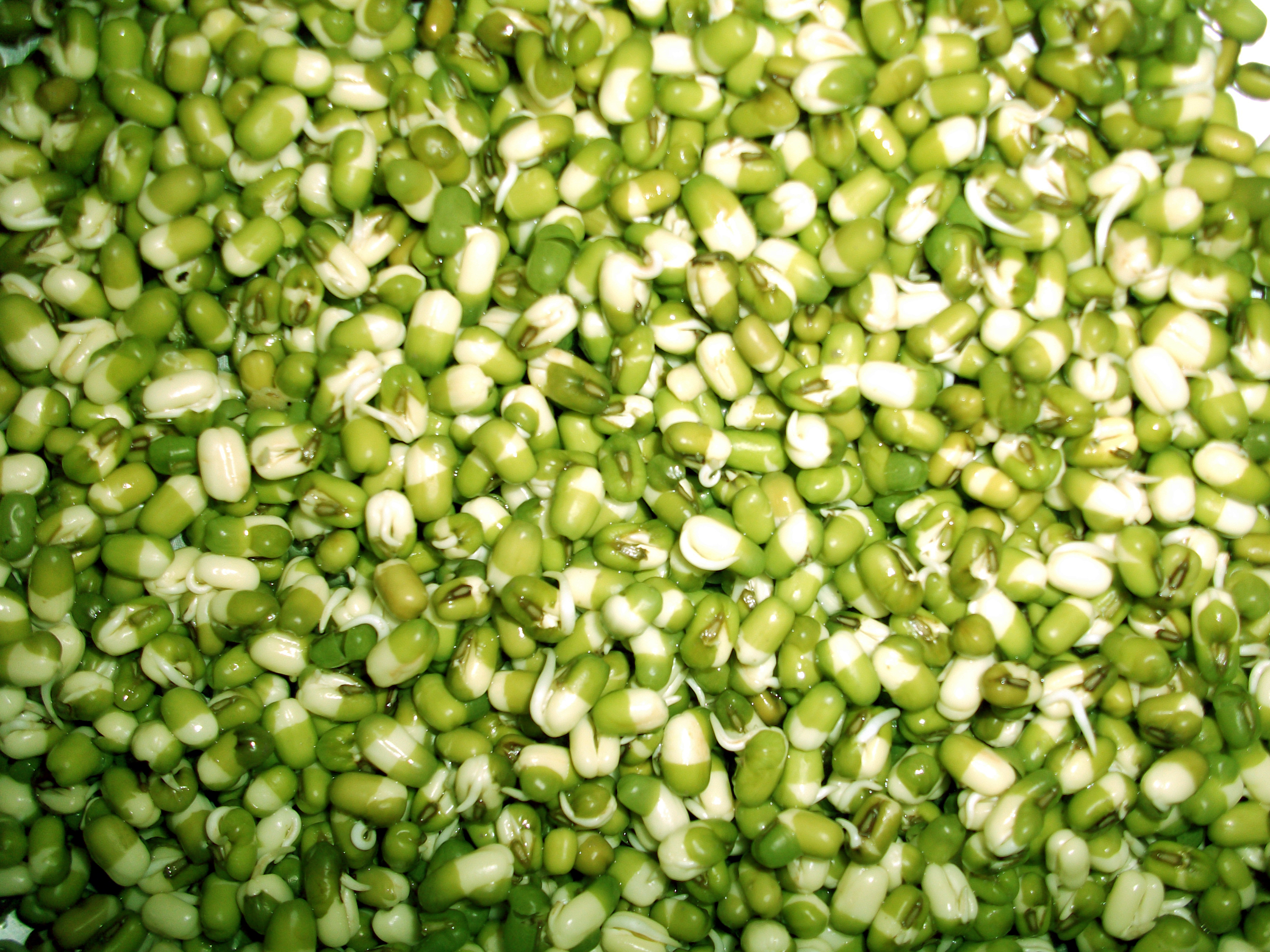 """Mung Bean Sprouts Texture"""
