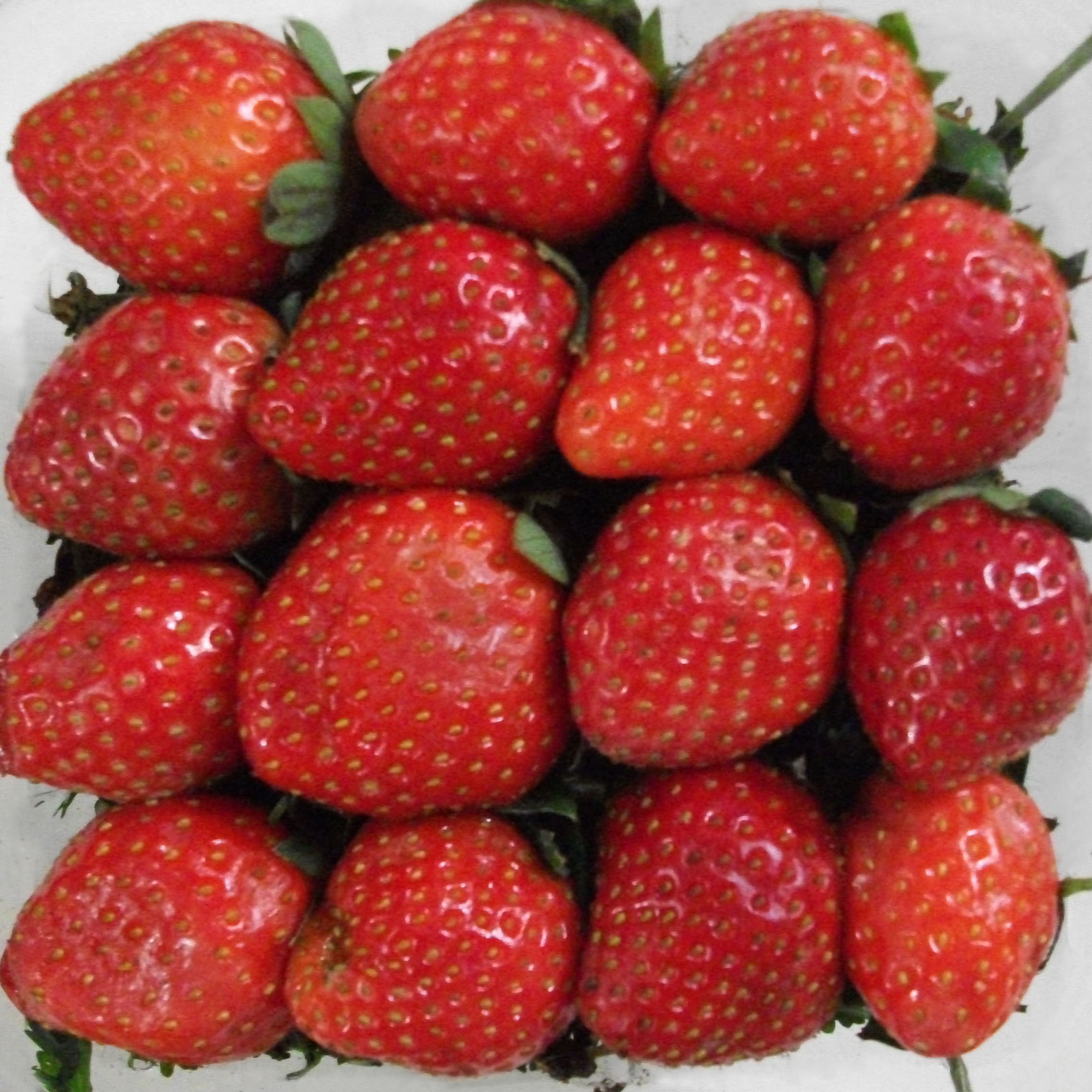 """""""A Bunch of Strawberries"""""""