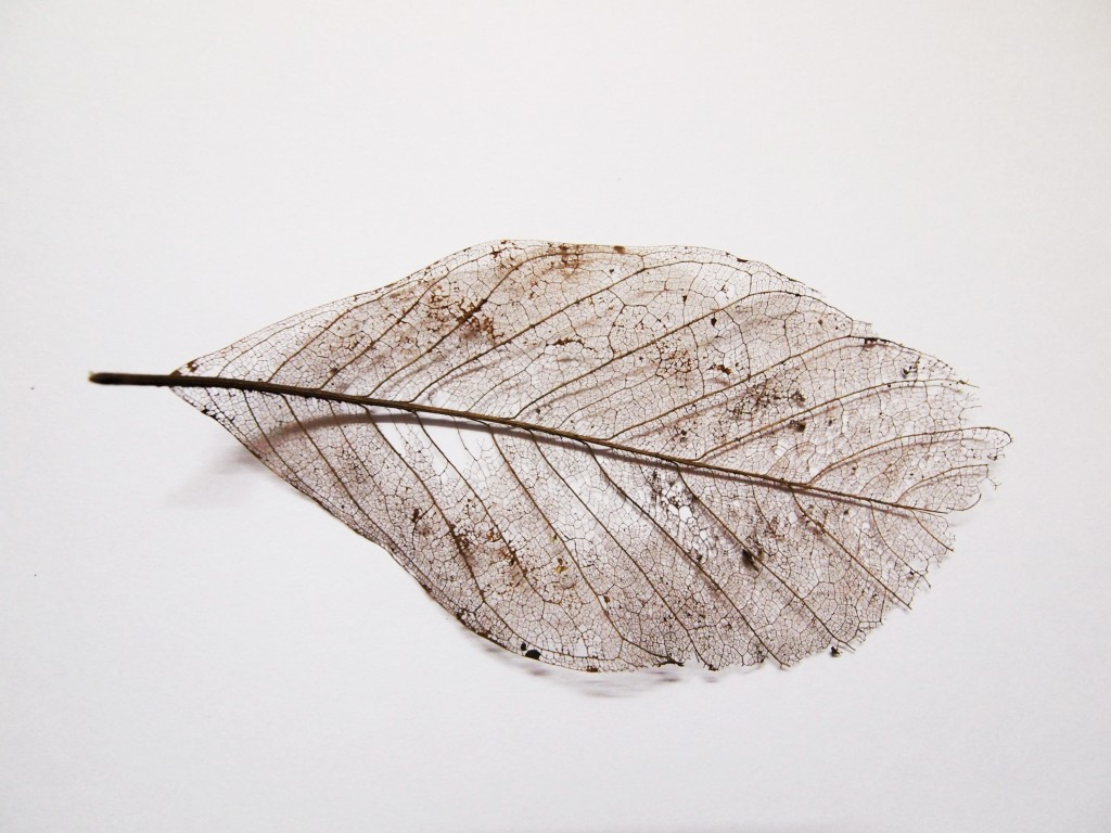 """Dry leaf veins texture closeup 2"""