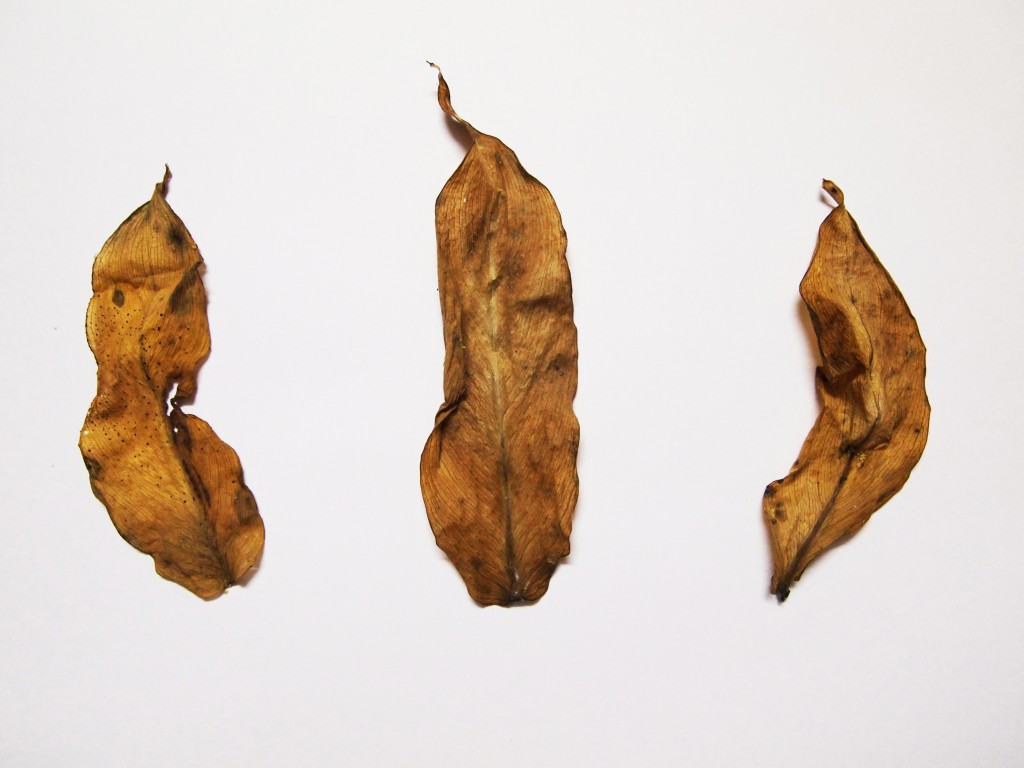"""""""Dry leaves texture 5"""""""
