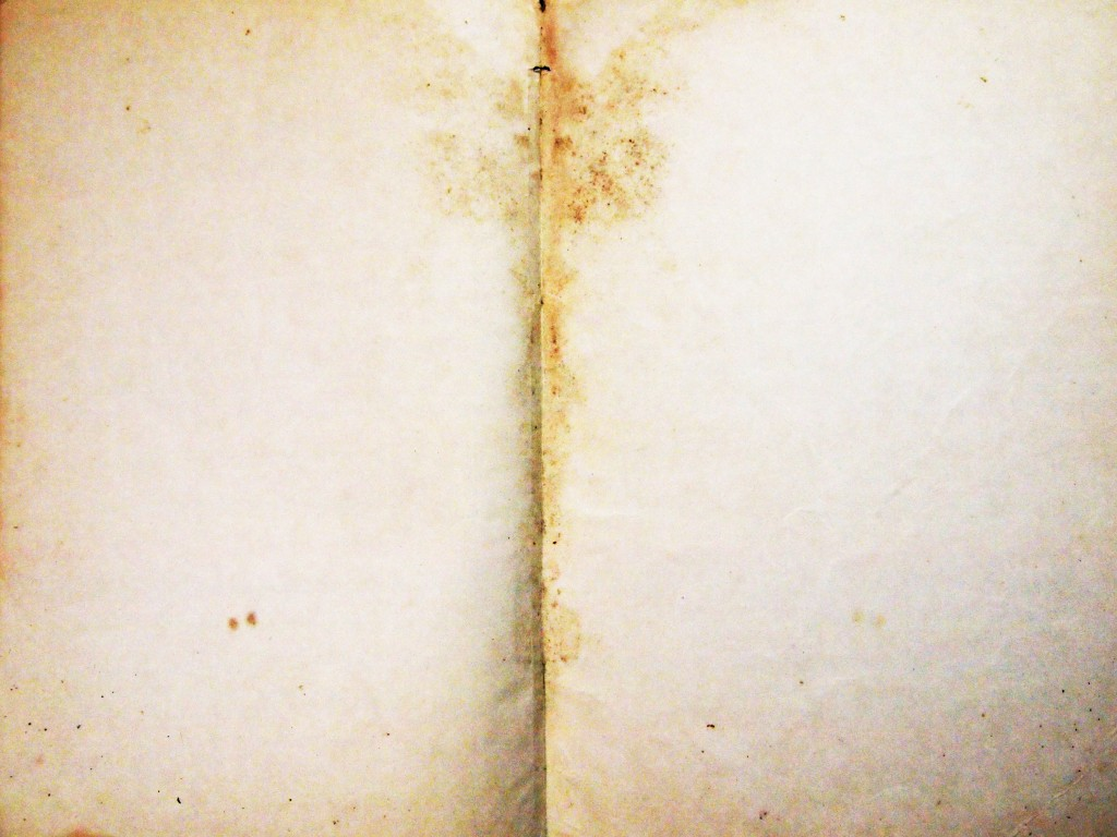 """""""Torn Tattered Paper Texture 10"""""""